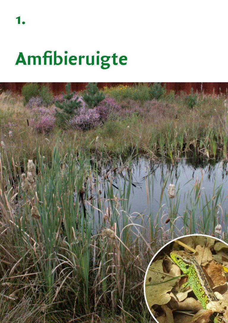 Biodiversiteit A7 Gemeente Rheden LR WEB_Pagina_03